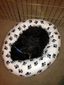 Jack in paw bed