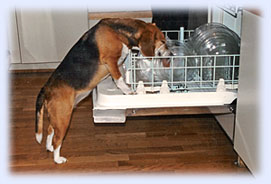 dog dishwasher
