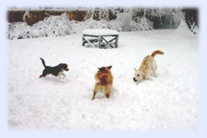 dog winter exercise