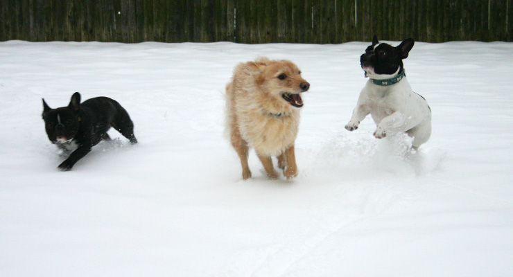 winterize your dog