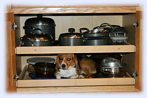 dog hiding in cabinet